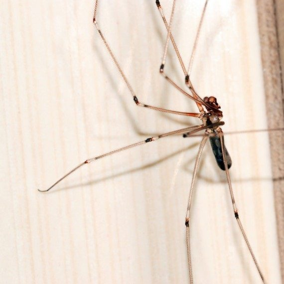 Spiders, Pest Control in Wealdstone, Harrow Weald, HA3. Call Now! 020 8166 9746