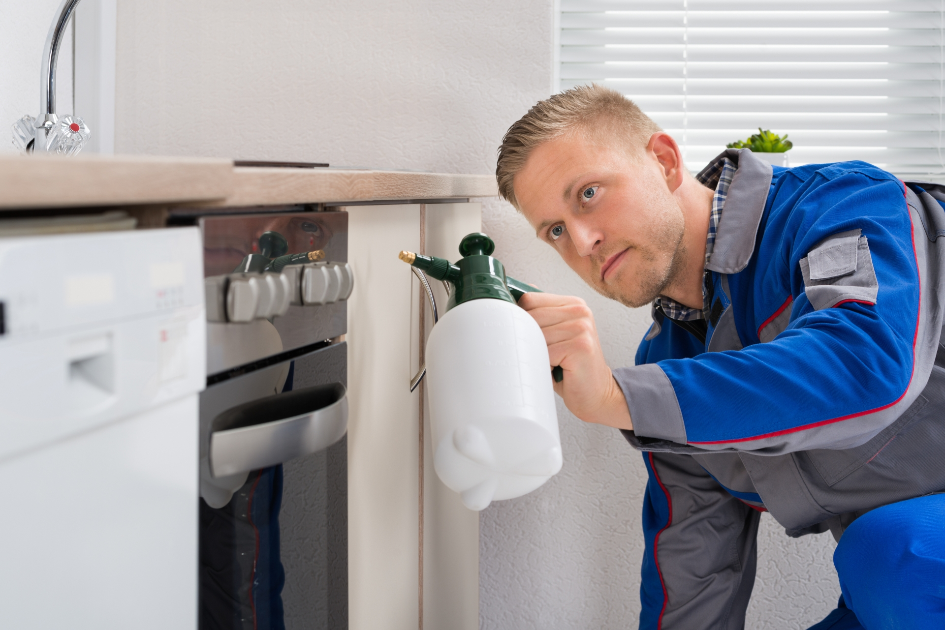 Pest Inspection, Pest Control in Wealdstone, Harrow Weald, HA3. Call Now 020 8166 9746